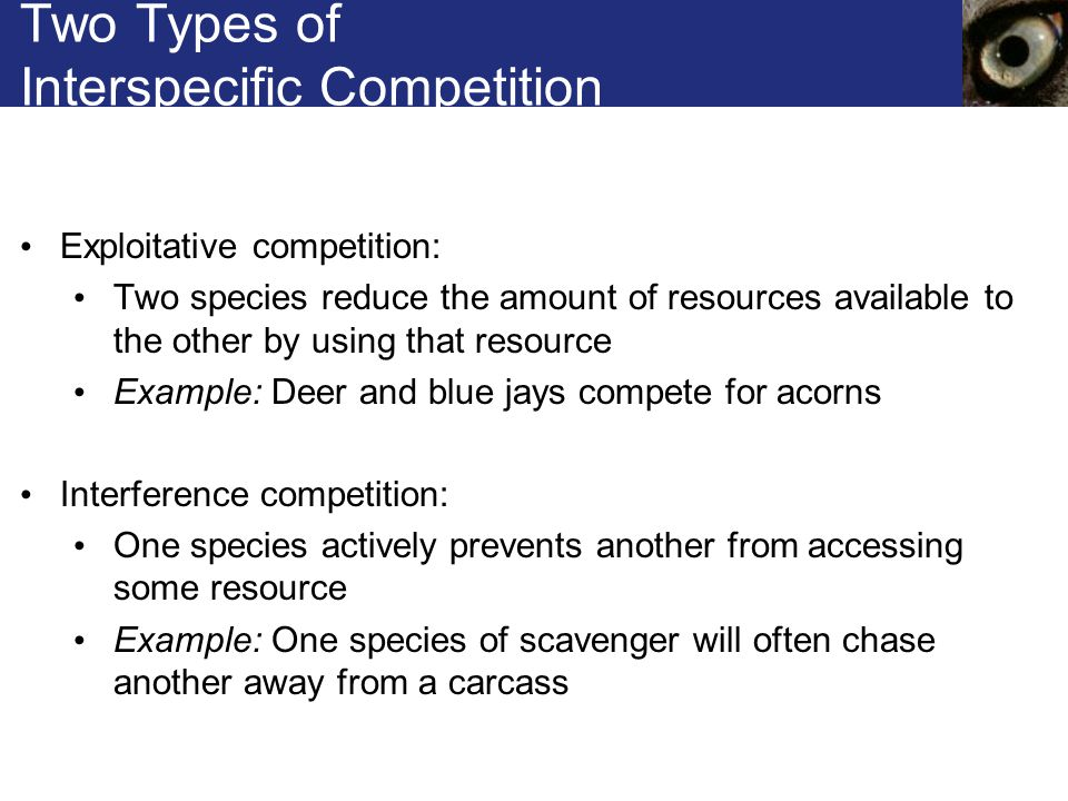 Two Types of Interspecific Competition Exploitative competition: Two species reduce the amount of resources available to the other by using that resou
