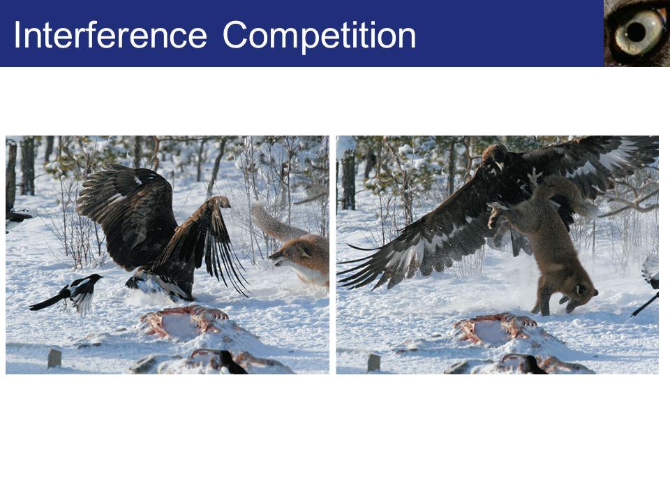 Interference Competition