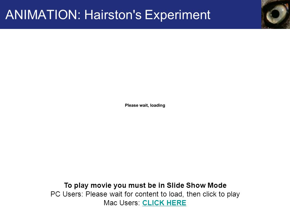 ANIMATION: Hairston's Experiment To play movie you must be in Slide Show Mode PC Users: Please wait for content to load, then click to play Mac Users: