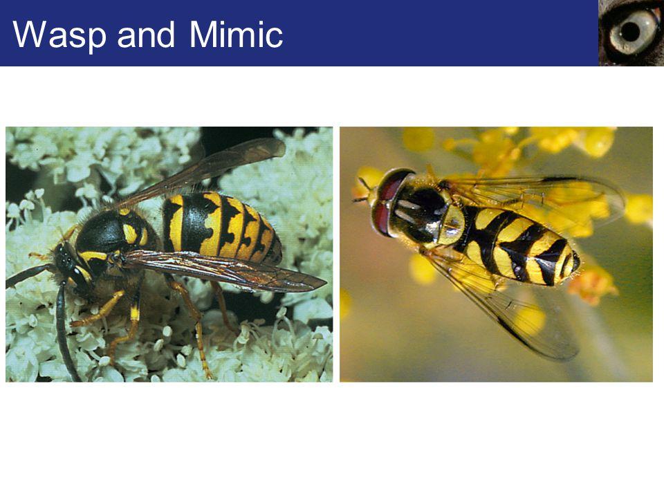 Wasp and Mimic