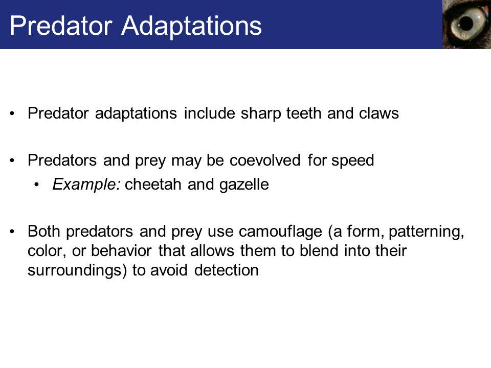 Predator Adaptations Predator adaptations include sharp teeth and claws Predators and prey may be coevolved for speed Example: cheetah and gazelle Bot