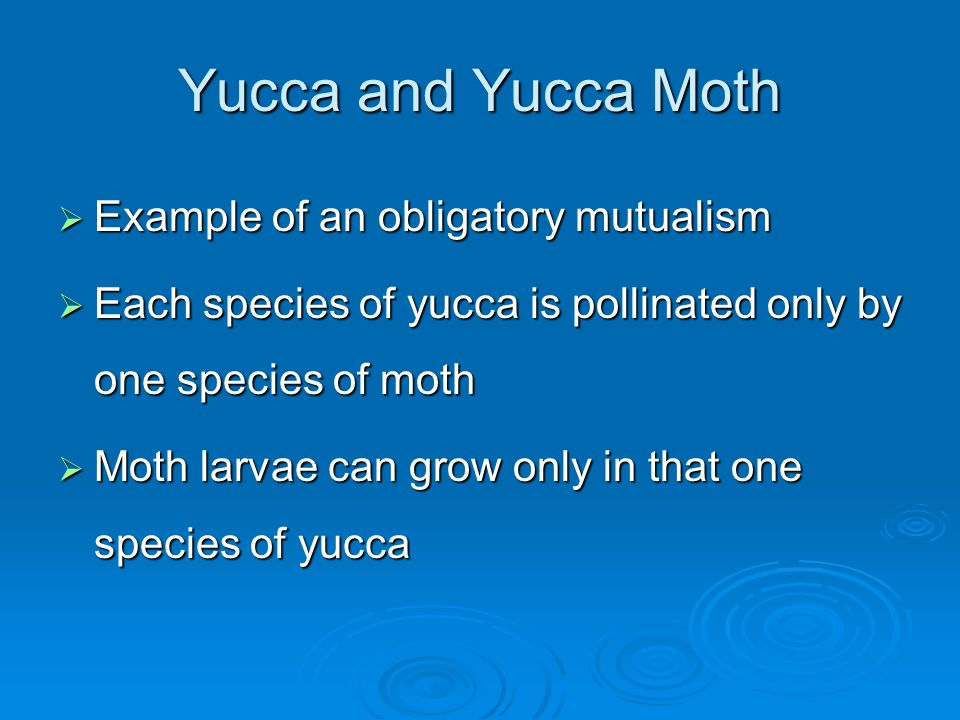 Yucca and Yucca Moth  Example of an obligatory mutualism  Each species of yucca is pollinated only by one species of moth  Moth larvae can grow only in that one species of yucca