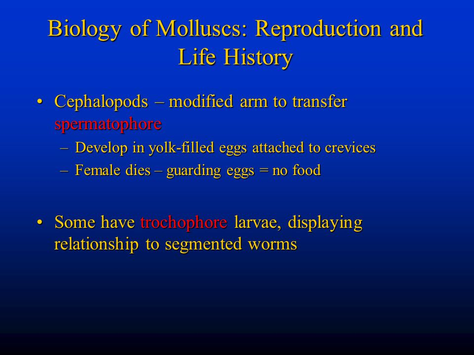 Biology of Molluscs: Reproduction and Life History Cephalopods – modified arm to transfer spermatophoreCephalopods – modified arm to transfer spermato