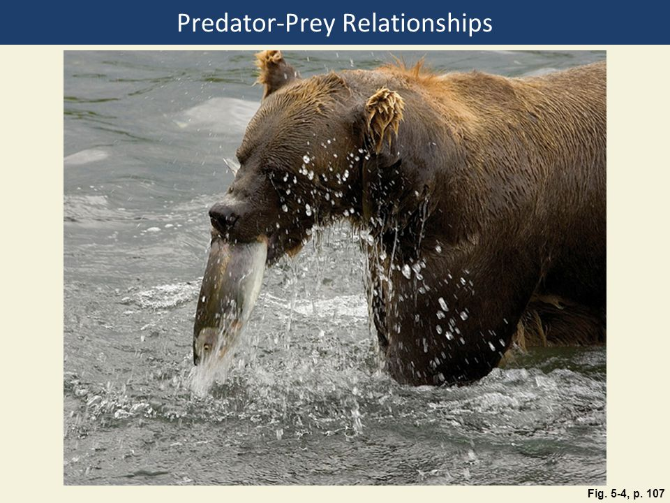 Predator-Prey Relationships Fig. 5-4, p. 107