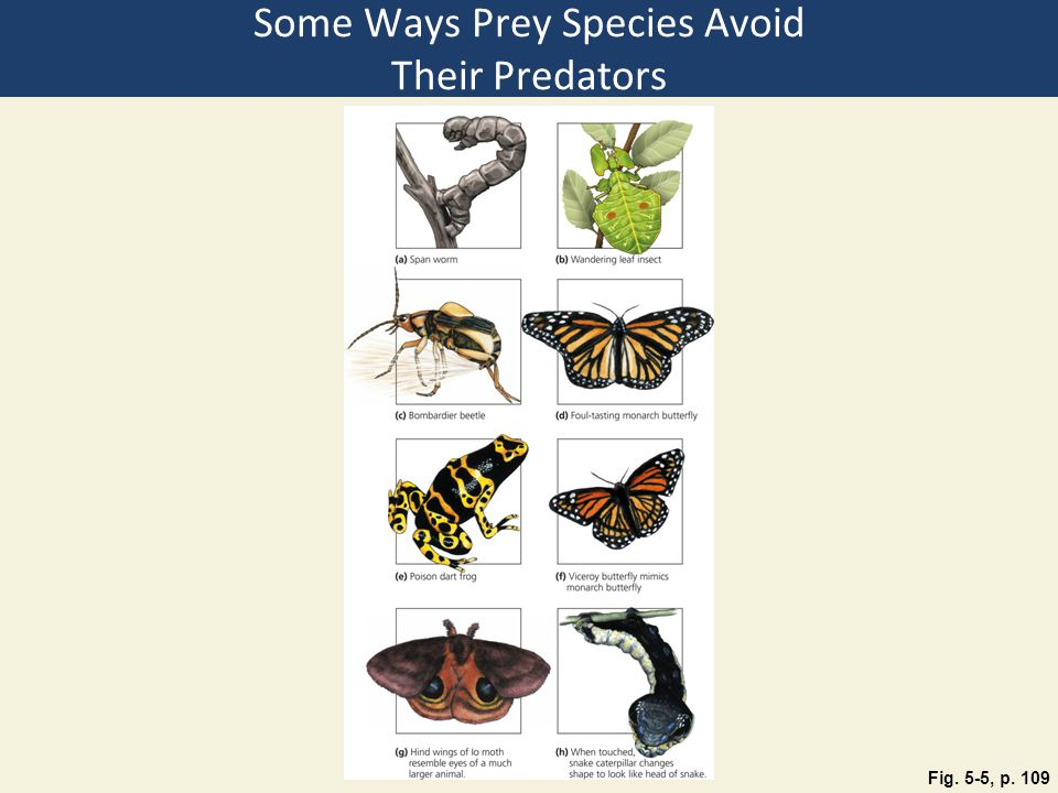 Some Ways Prey Species Avoid Their Predators Fig. 5-5, p. 109