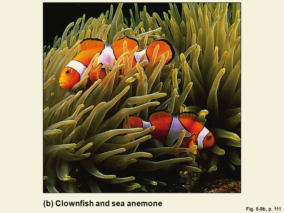 Fig. 5-9b, p. 111 (b) Clownfish and sea anemone