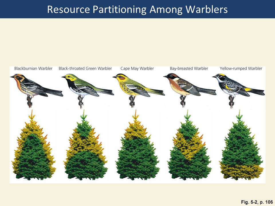 Resource Partitioning Among Warblers Fig. 5-2, p. 106