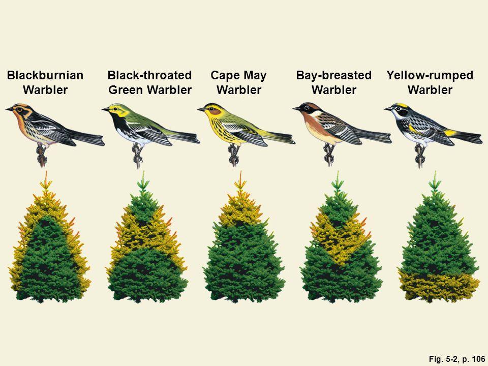 Cape May Warbler Stepped Art Blackburnian Warbler Black-throated Green Warbler Yellow-rumped Warbler Bay-breasted Warbler Fig.