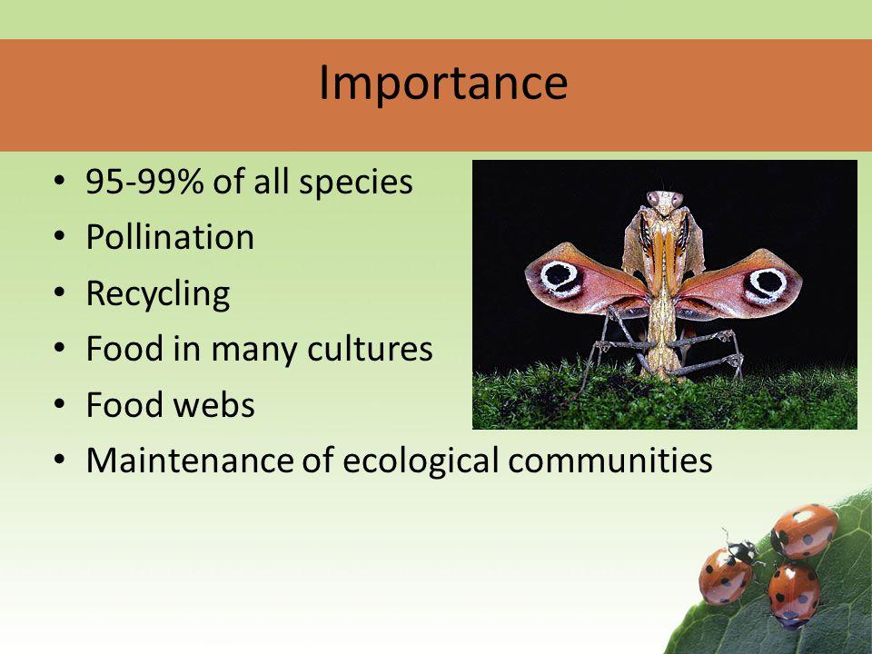 Invertebrates Rachel Reed & Erin Baxter