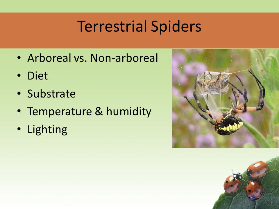 Spiders Aquatic & terrestrial Carnivores Diverse Environments Sexual Reproduction Silk!
