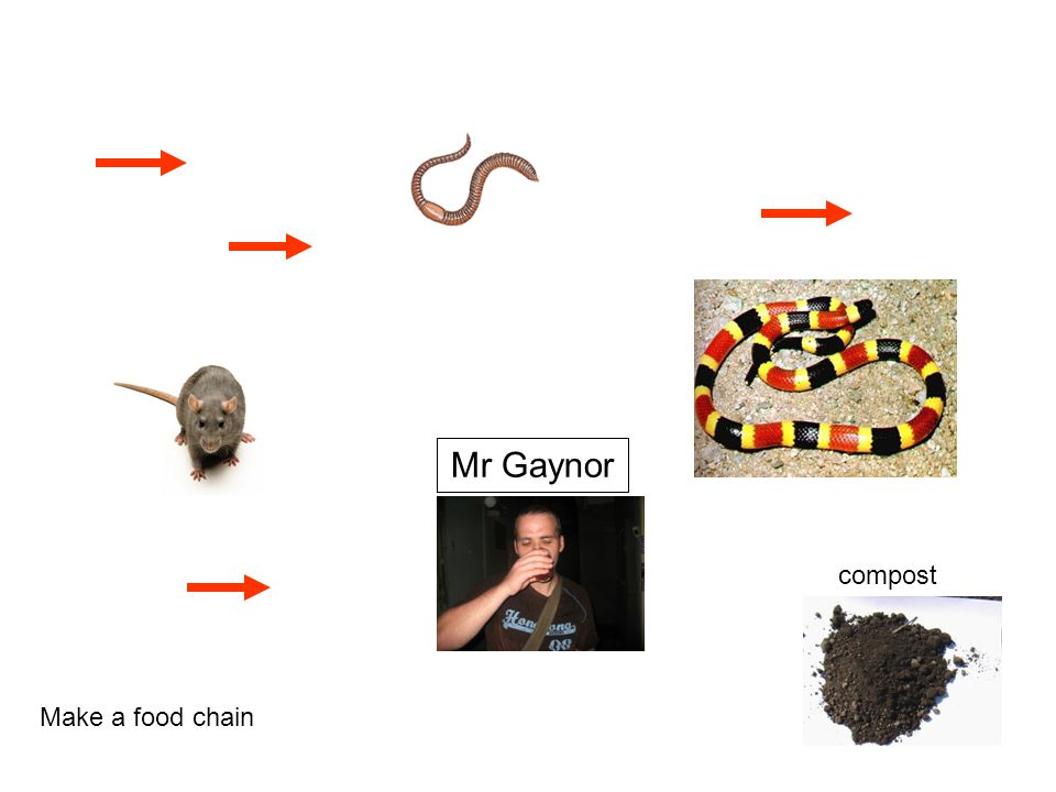Mr Gaynor compost Make a food chain