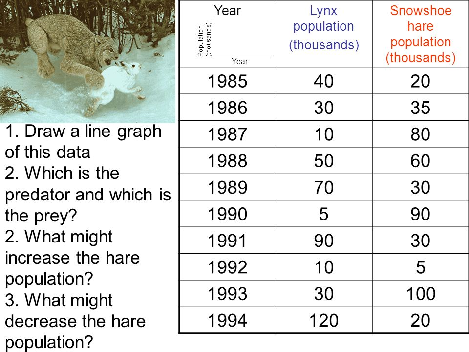 Lynx and snowshoe hare YearLynx population (thousands) Snowshoe hare population (thousands) 19854020 19863035 19871080 19885060 19897030 1990590 19919030 1992105 199330100 199412020 1.