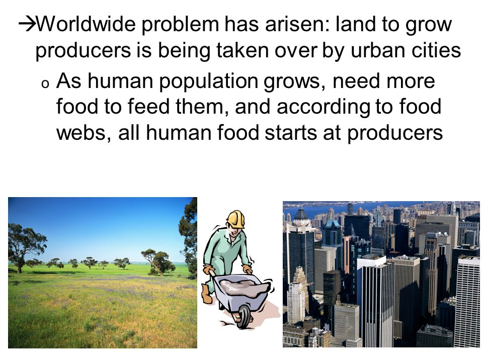  Worldwide problem has arisen: land to grow producers is being taken over by urban cities o As human population grows, need more food to feed them, and according to food webs, all human food starts at producers