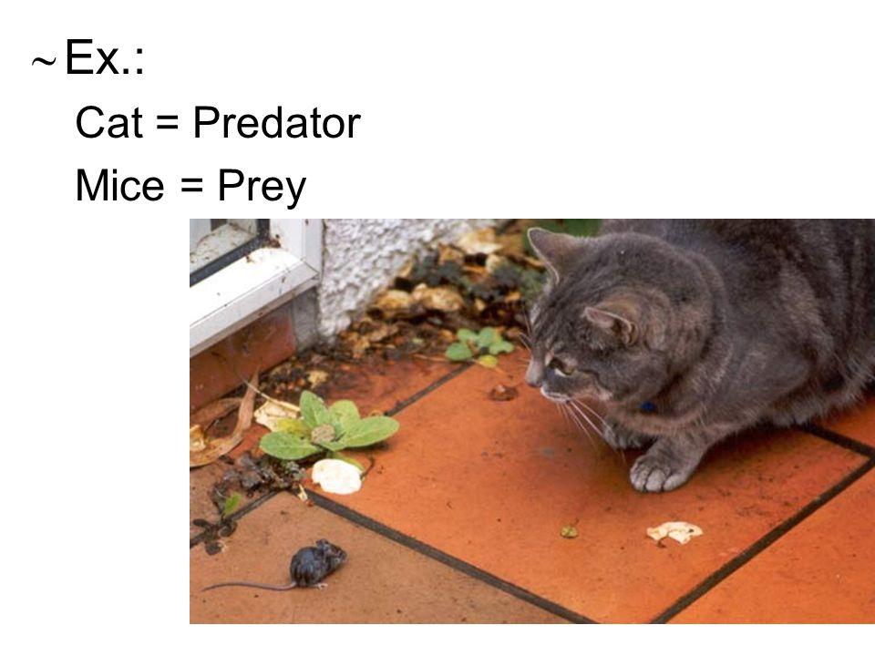  Ex.: Cat = Predator Mice = Prey