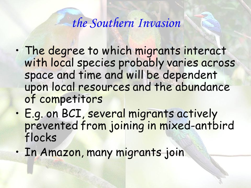 the Southern Invasion The degree to which migrants interact with local species probably varies across space and time and will be dependent upon local resources and the abundance of competitors E.g.