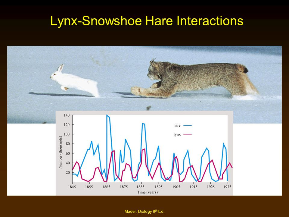 Mader: Biology 8 th Ed. Lynx-Snowshoe Hare Interactions
