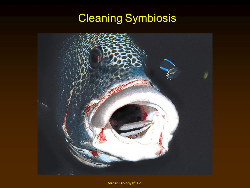 Mader: Biology 8 th Ed. Cleaning Symbiosis