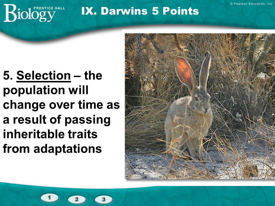IX. Darwins 5 Points 5. Selection – the population will change over time as a result of passing inheritable traits from adaptations