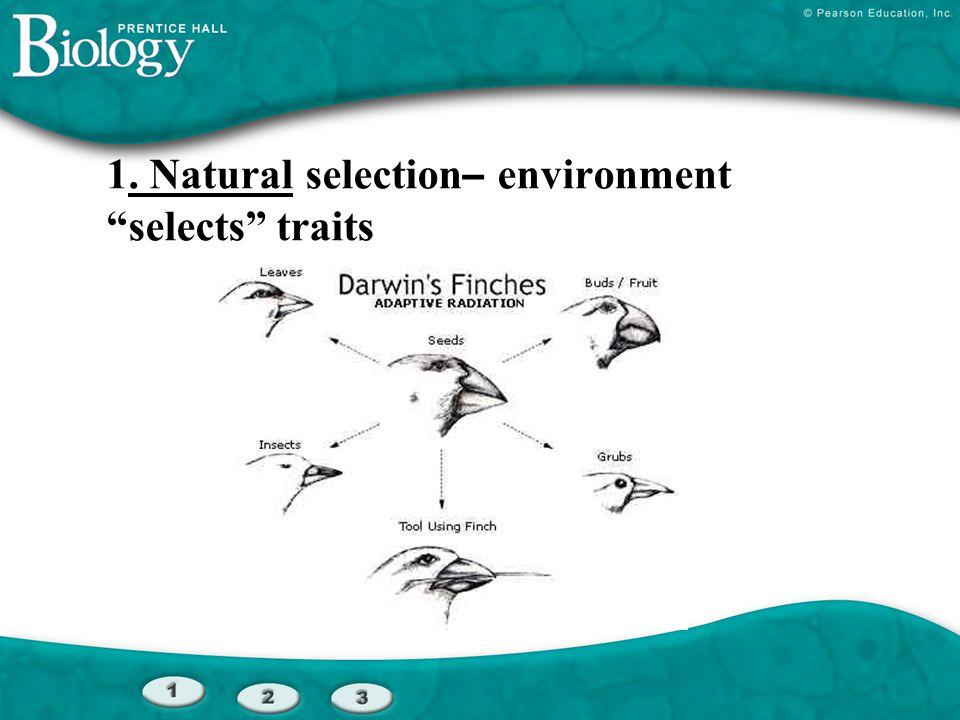 """1. Natural selection – environment """"selects"""" traits"""