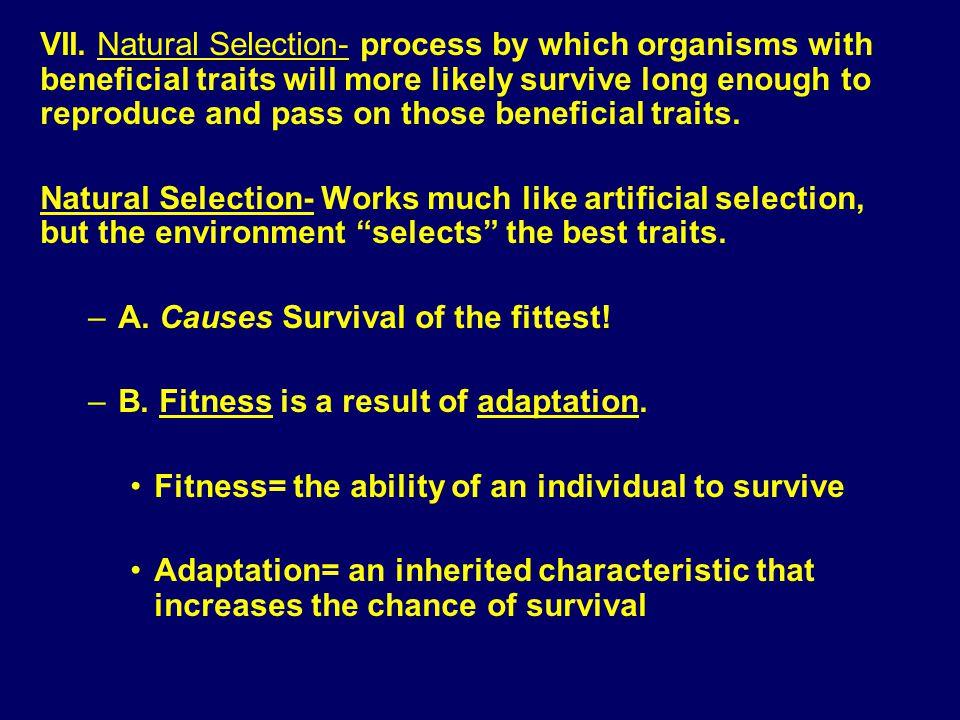 Evolution & Predator/Prey Relationships http://ragamuffinsalt.files.wordpress.com/2008/06/scary-bear.jpg