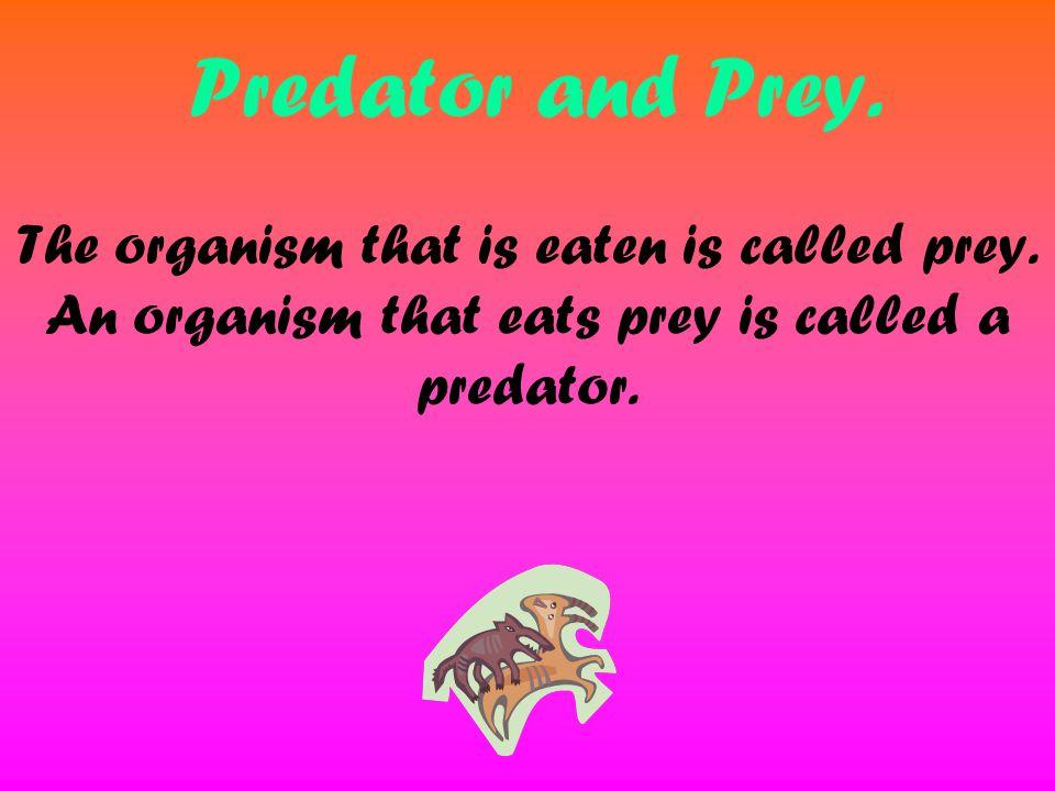 Predator and Prey. The organism that is eaten is called prey. An organism that eats prey is called a predator.