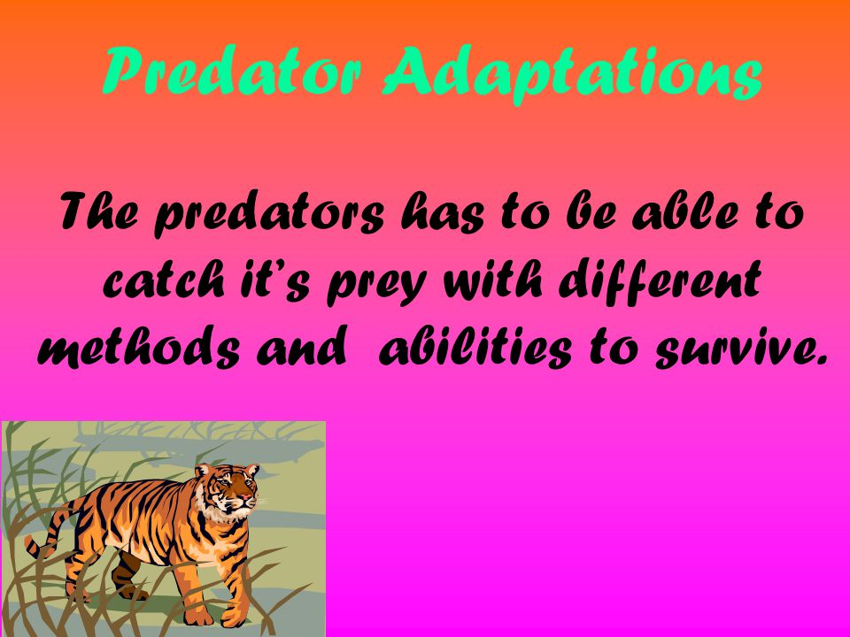 Predator Adaptations The predators has to be able to catch it's prey with different methods and abilities to survive.