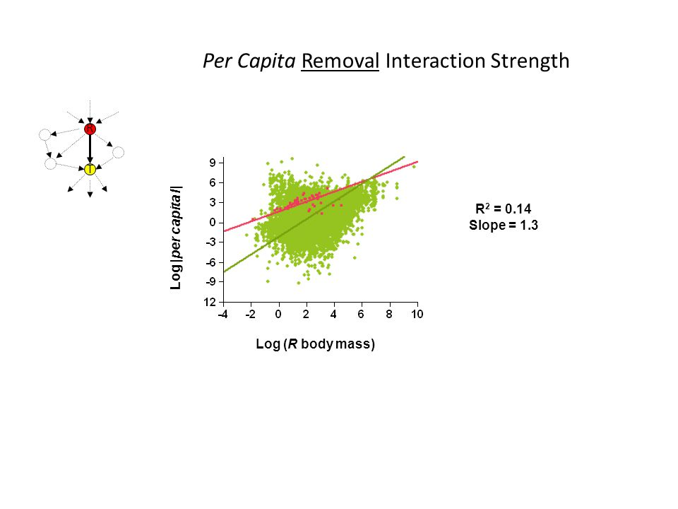 Log |per capita I| R 2 = 0.14 Slope = 1.3 Log (R body mass) Per Capita Removal Interaction Strength R T