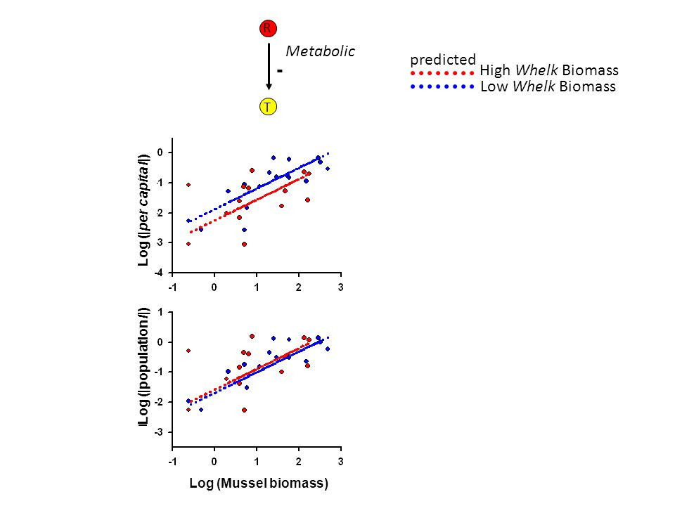 R T - Metabolic predicted Log (Mussel biomass) Log (|per capita I|) Log (|population I|) Low Whelk Biomass High Whelk Biomass