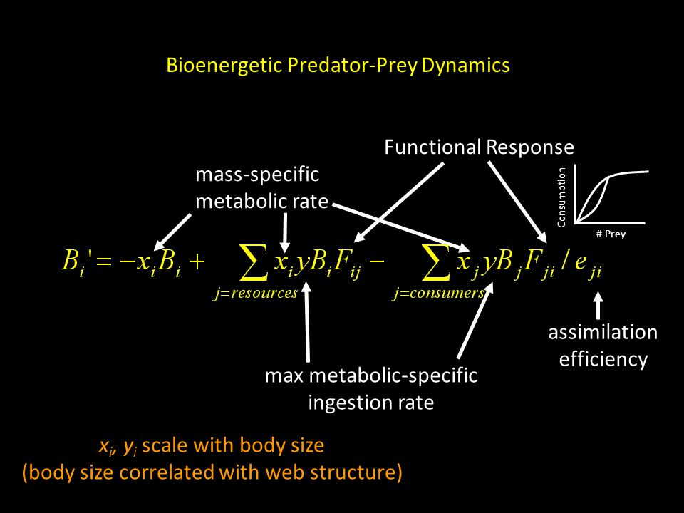 mass-specific metabolic rate max metabolic-specific ingestion rate Functional Response assimilation efficiency Bioenergetic Predator-Prey Dynamics x i, y i scale with body size (body size correlated with web structure) # Prey Consumption