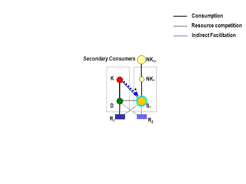S1S1 K D S1S1 NK 1 Secondary Consumers + R1R1 R2R2 NK 2n Consumption Resource competition Indirect Facilitation
