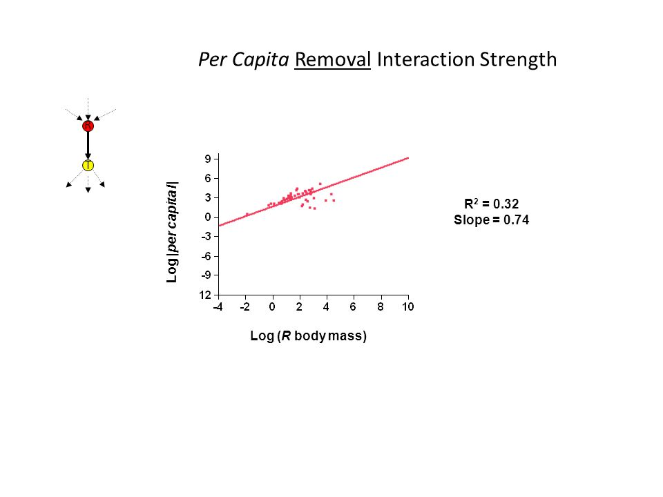 Log |per capita I| R 2 = 0.32 Slope = 0.74 Log (R body mass) Per Capita Removal Interaction Strength R T