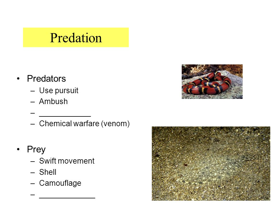 10 Predators –Use pursuit –Ambush –____________ –Chemical warfare (venom) Prey –Swift movement –Shell –Camouflage –_____________ Predation