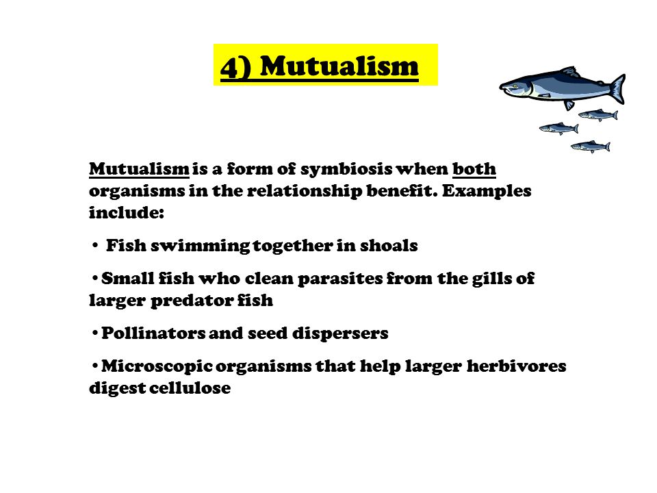 4) Mutualism Mutualism is a form of symbiosis when both organisms in the relationship benefit. Examples include: Fish swimming together in shoals Smal
