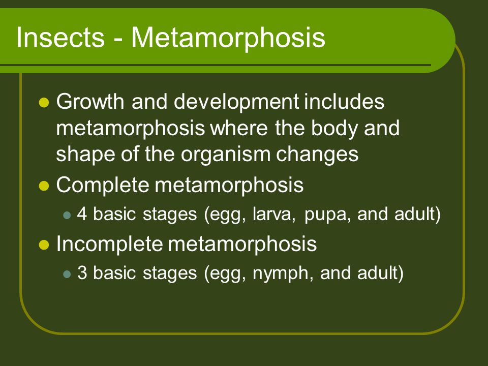 Insects - Metamorphosis Growth and development includes metamorphosis where the body and shape of the organism changes Complete metamorphosis 4 basic stages (egg, larva, pupa, and adult) Incomplete metamorphosis 3 basic stages (egg, nymph, and adult)