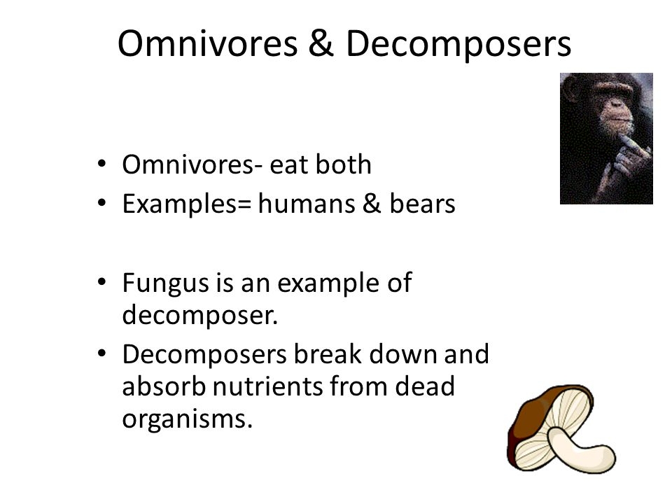 Detritivores Detritivores eat garbage of ecosystem – organisms that have recently dies, fallen leaves and branches, animal wastes (vulture, bacteria and fungi - decomposers)