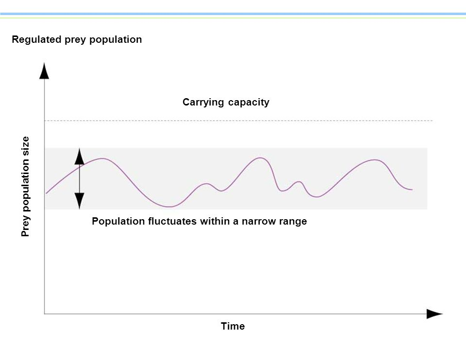 Regulated prey population Time Population fluctuates within a narrow range Carrying capacity Prey population size