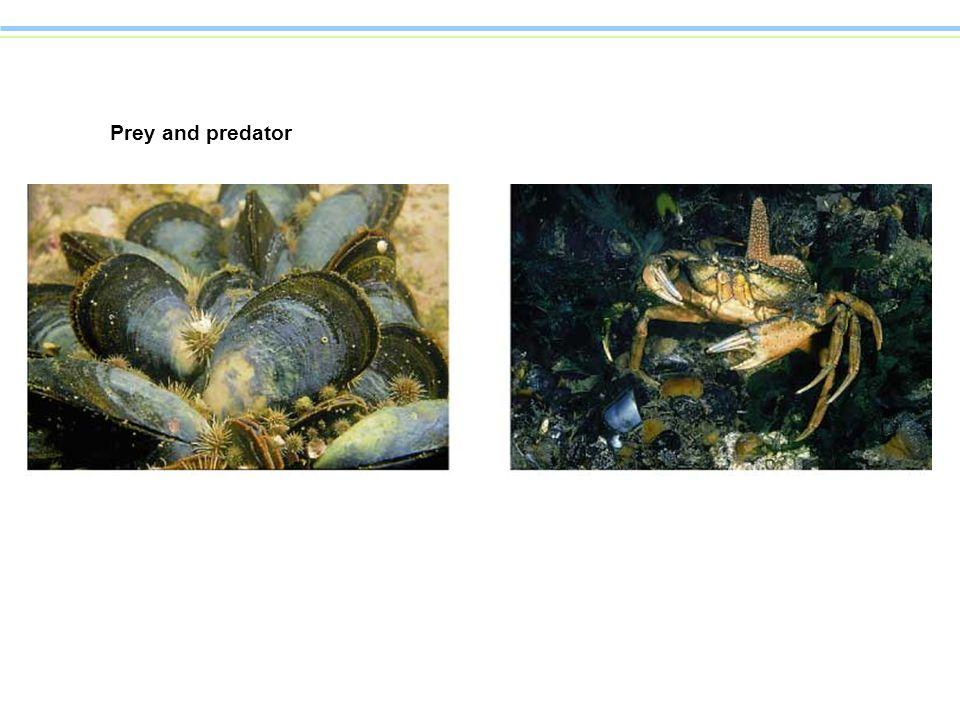Prey and predator