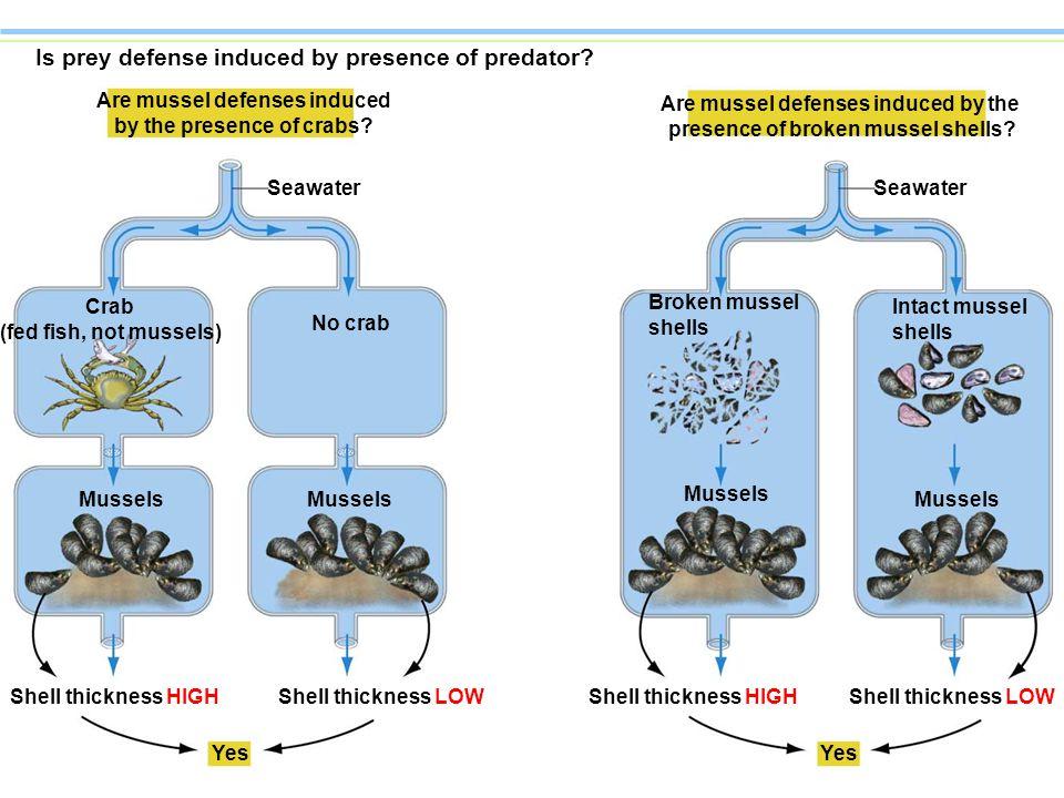 Is prey defense induced by presence of predator.