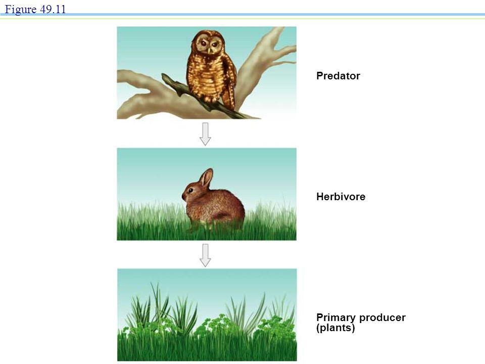Predator Herbivore Primary producer (plants) Figure 49.11