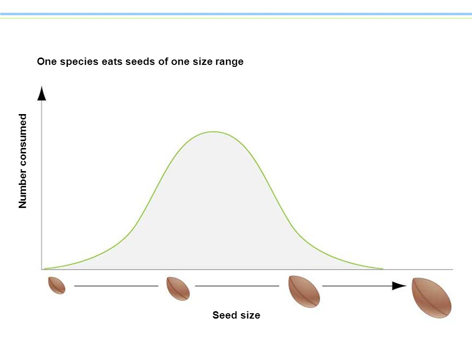 One species eats seeds of one size range Number consumed Seed size