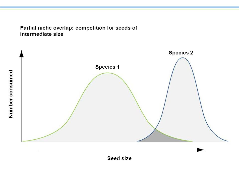 Partial niche overlap: competition for seeds of intermediate size Species 1 Species 2 Number consumed Seed size