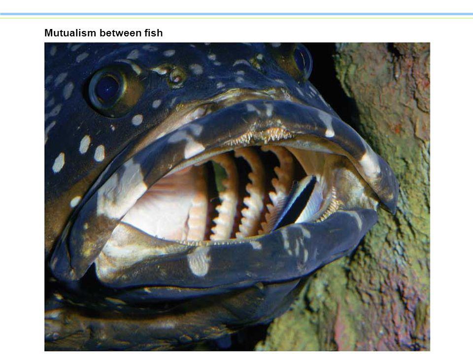 Mutualism between fish