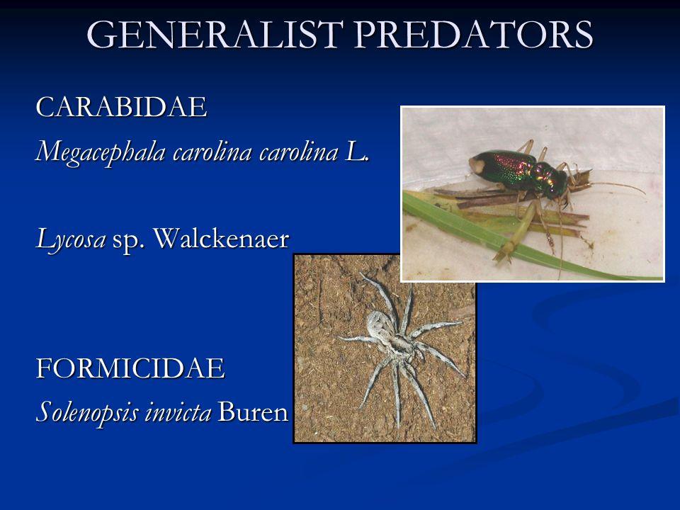 GENERALIST PREDATORS CARABIDAE Megacephala carolina carolina L.