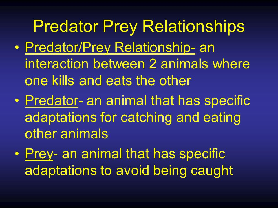Predator/Prey Relationship- an interaction between 2 animals where one kills and eats the other Predator- an animal that has specific adaptations for catching and eating other animals Prey- an animal that has specific adaptations to avoid being caught Predator Prey Relationships