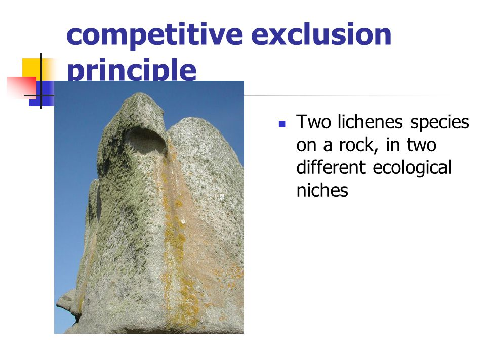 competitive exclusion principle Two lichenes species on a rock, in two different ecological niches