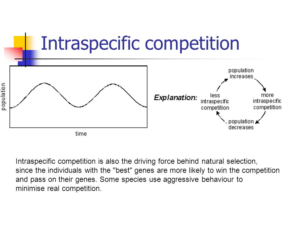 Intraspecific competition Intraspecific competition is also the driving force behind natural selection, since the individuals with the best genes are more likely to win the competition and pass on their genes.