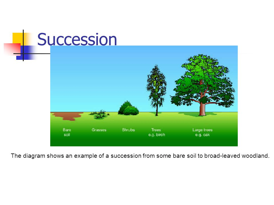 Succession The diagram shows an example of a succession from some bare soil to broad-leaved woodland.