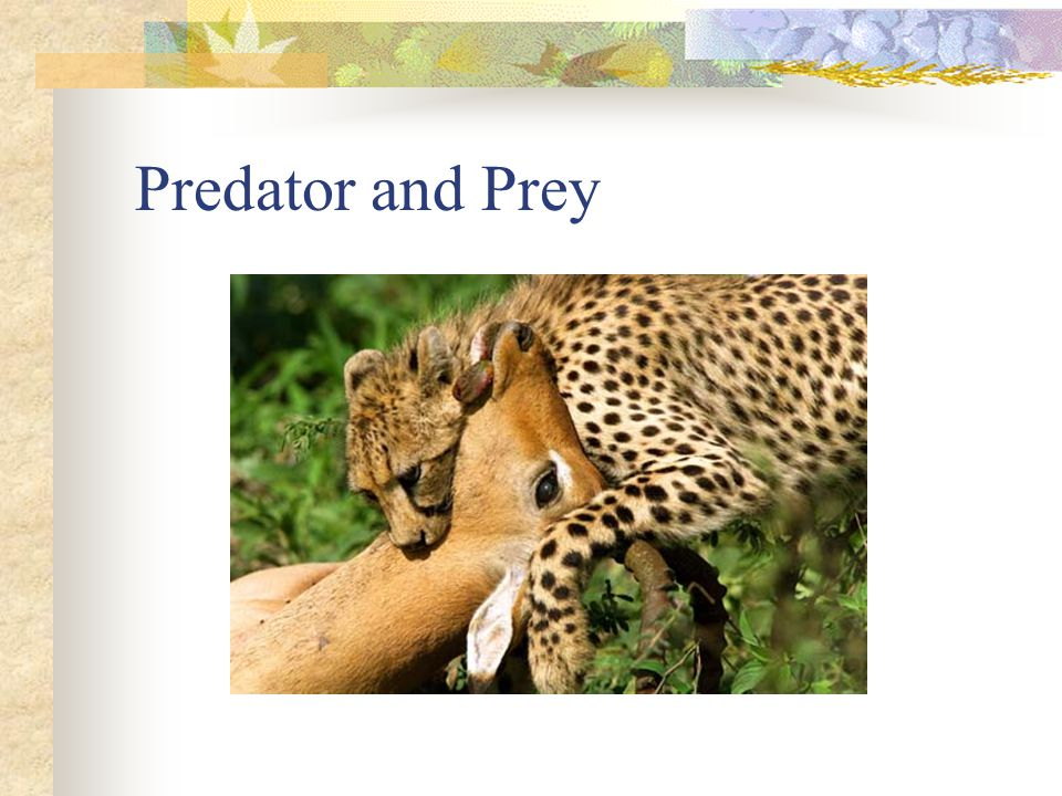 The sizes of predator and prey populations are closely linked.