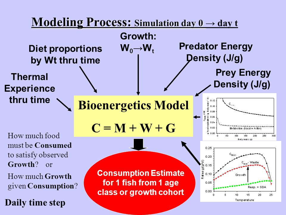 Modeling Process: Simulation day 0 Modeling Process: Simulation day 0 → day t Thermal Experience thru time Diet proportions by Wt thru time Prey Energ