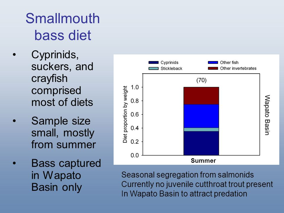 Smallmouth bass diet Cyprinids, suckers, and crayfish comprised most of diets Sample size small, mostly from summer Bass captured in Wapato Basin only